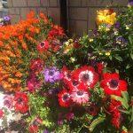 馬込沢の花
