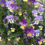 馬込沢の事務所の花